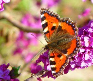 butterfly-43008_1280