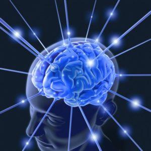 hjerne1